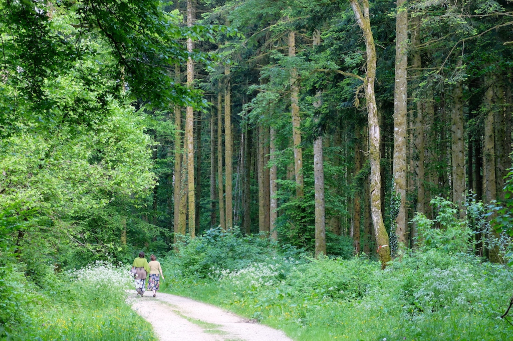La forêt des Tartaroz...