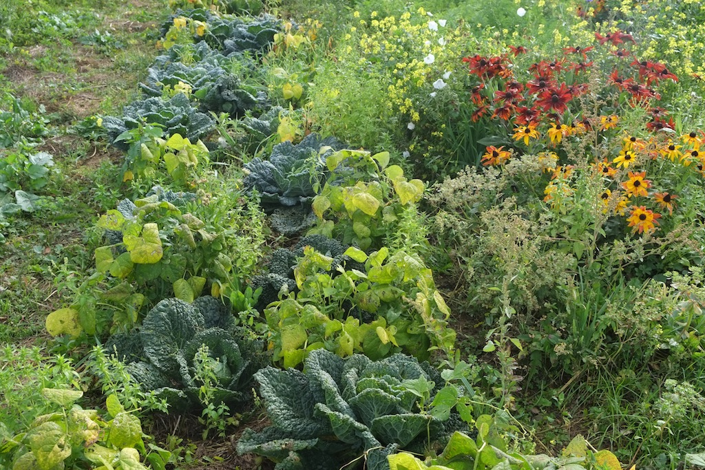 bio-jardin