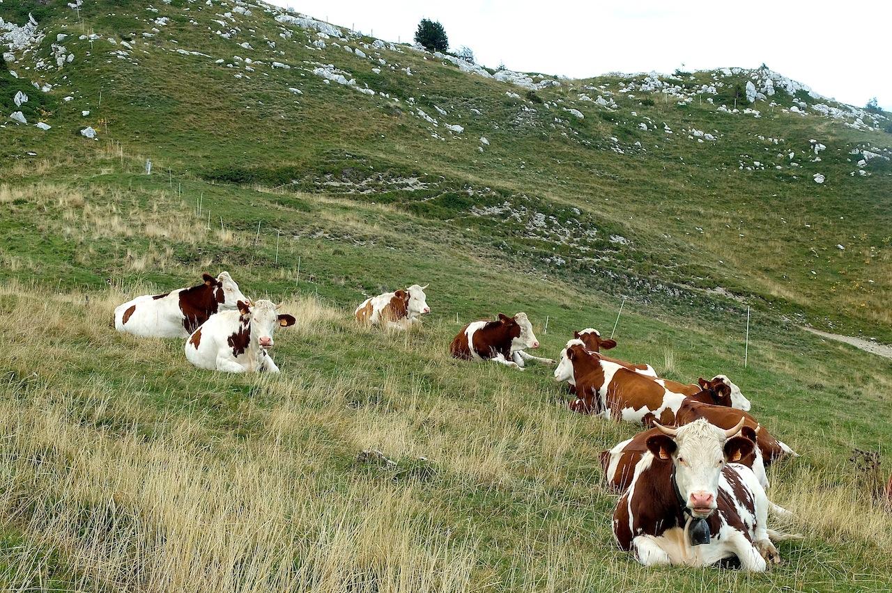 Le versant oriental du Crêt de la Neige. Les Monts-Jura ne sont pas concernés par l'arasement des affleurements rocheux qui a commencé à faire des ravages dans le Haut-Doubs. (Photo Daniel Bordur)