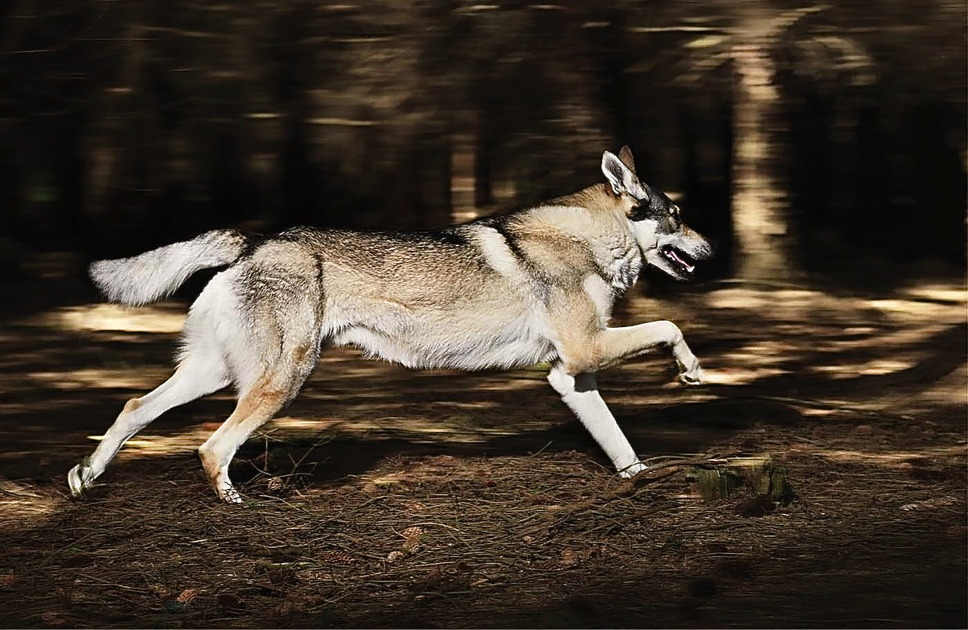 loups-solitaires-hd