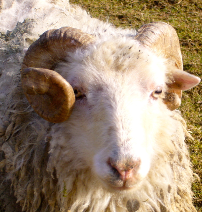 moutons_2_70