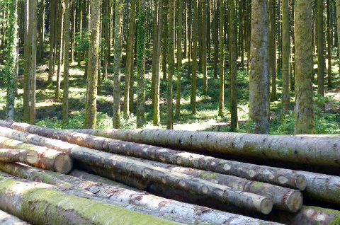 Une forêt modèle dans le Jura... Pas sûr que la biodiversité y trouve son compte !